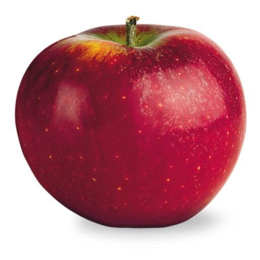 Ingrid Marie æble 1 stk.