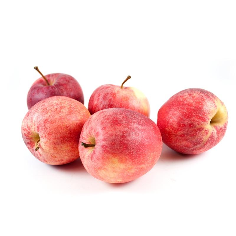 Æble Elstar -0
