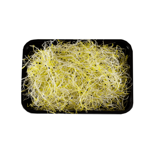 Hvidløg Spirer 1 stk 50 gr.