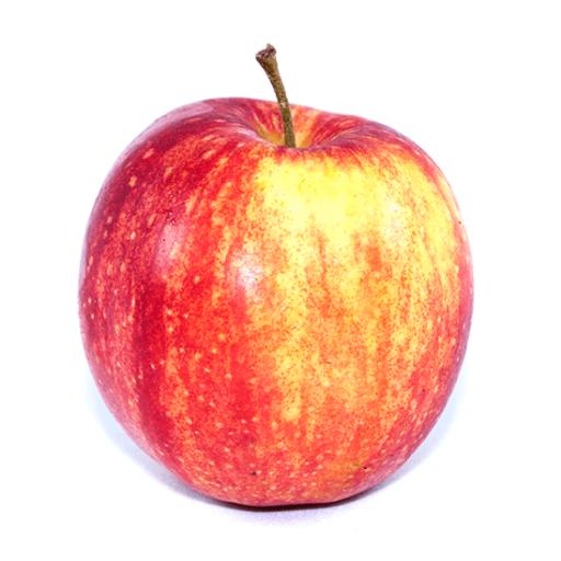 Royal gala æble DK 1 stk.